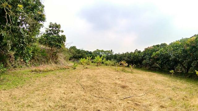 南化超便宜平坦農地